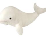 Baleine blanche-White whale