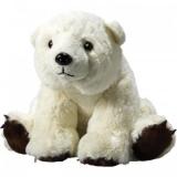 Ours polaire - Polar bear
