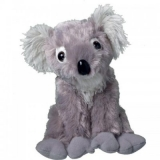 Koala gris - Grey koala