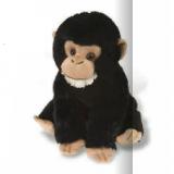 Bébé Chimpanzé - Champ Baby