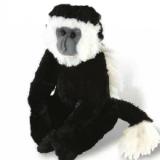 Singe Colombus-Columbus Monkey
