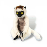 Lémurien sifaka - Lemur Sifaka