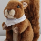 Ecureuil Mas du Grand Vallon - Squirrel