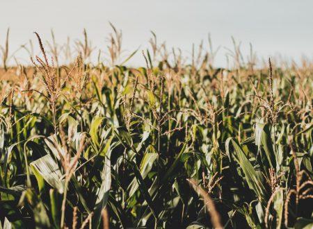 le PLA de maïs une matières eco responsable